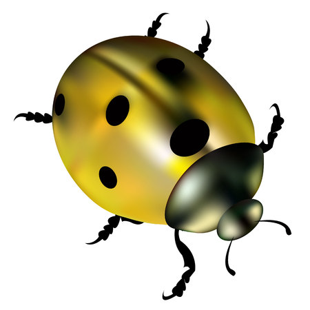 black and white: ladybug vector red illustration colored beetle insect