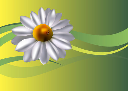 flower vector floral white summer chamomile plant