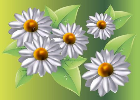 marguerite: flower vector floral white summer chamomile plant