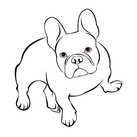 dog, vector, breed, cute, pet, animal, bulldog, french, french bulldog, small, illustration Illustration