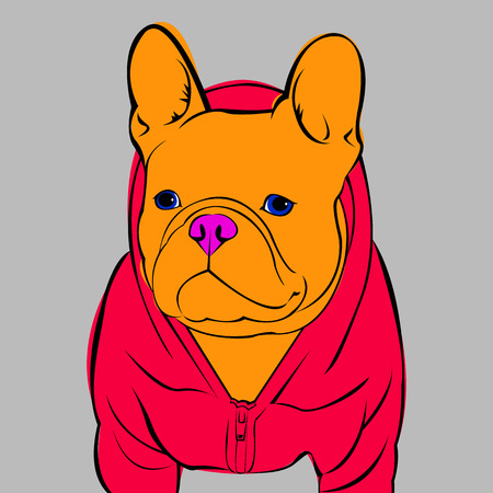 short haired: French Bulldog. Vector illustration for a card or poster. Print on clothes. Cute puppy. Pedigree dog. Illustration