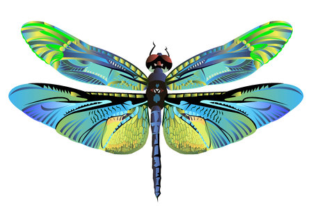 vector color art dragonfly nature wildlife fly Illustration