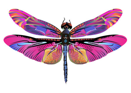 vector color art dragonfly nature wildlife fly 向量圖像