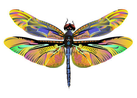 vector color art dragonfly nature wildlife fly