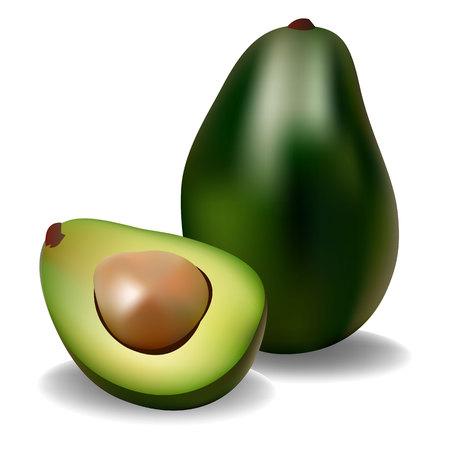 avocado fruit green vector food half healthy