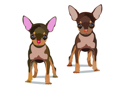 2 dogs vector small drawing illustration pet animal.