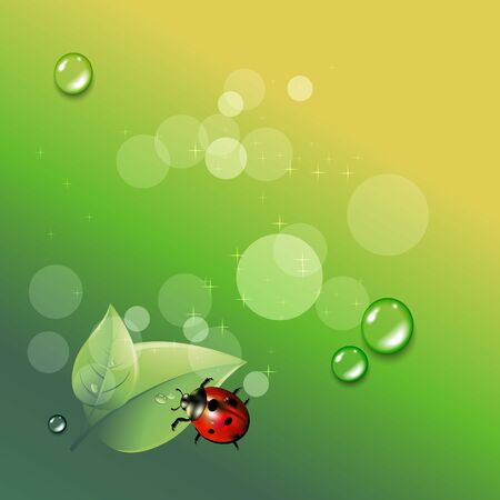 ladybug red illustration colored insect
