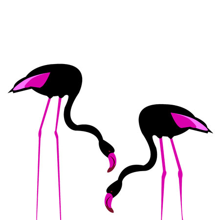 bird flamingo illustration pink exotic art silhouette beauty wild nature Illustration