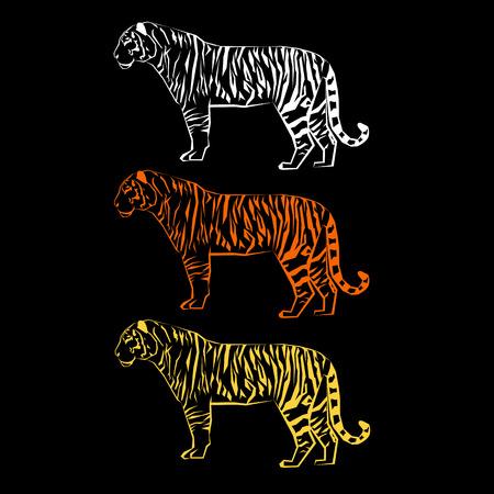tiger wild illustration strength mammal wildlife graphic carnivore wildcat