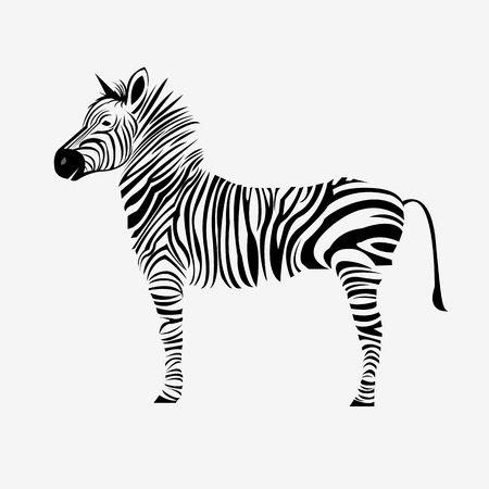 animal zebra illustration wild mammal white black zoo striped