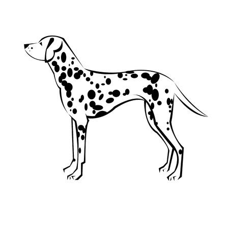 ダルメシアン ベクトル動物イラスト哺乳類ホワイト バック グラウンド ペット犬漫画 写真素材 - 74690242