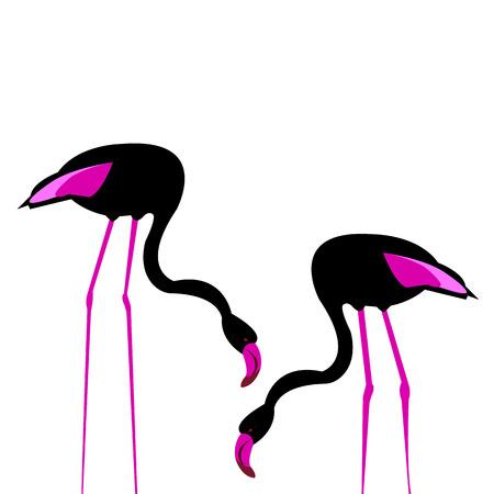 vector bird flamingo illustration pink exotic art silhouette beauty wild nature