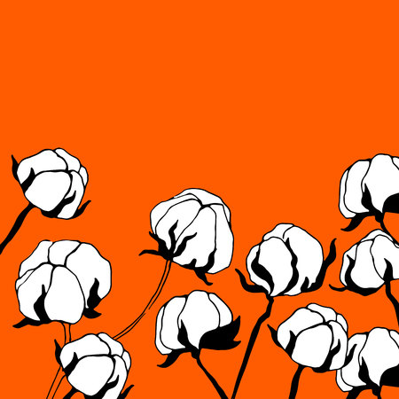 raw materials: cotton, vector, plant, natural, illustration, textile, white, organic, flower