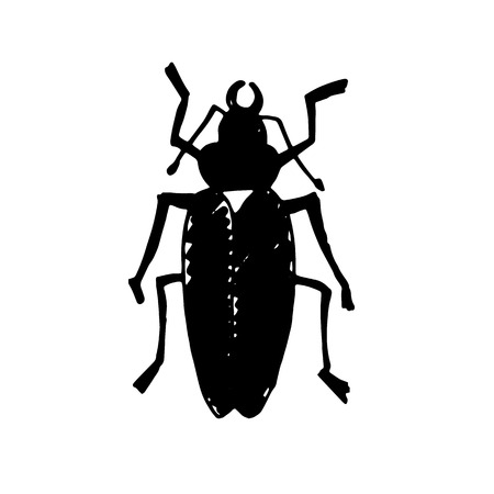 coleoptera: Beetle insect. Nature water beetle and zoology water beetle. Wildlife insect water black beetle ecology detail. Illustration