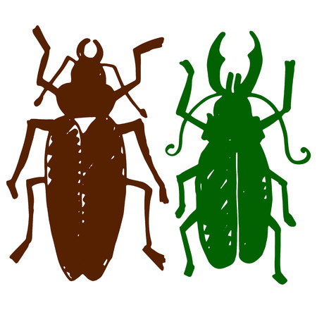 Beetle insect. Nature water beetle and zoology water beetle. Wildlife insect water black beetle ecology detail. Illustration