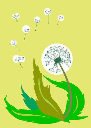 dandelion vector background botany flower blossom fluffy Illustration