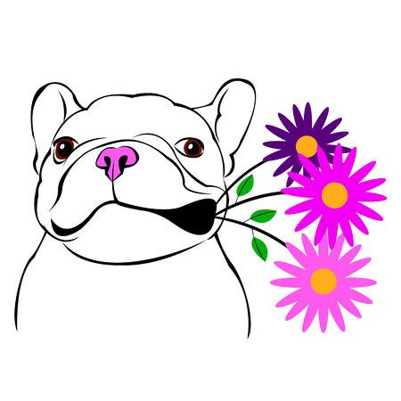 chien, vecteur, race, mignon, animal familier, animal, bouledogue, français