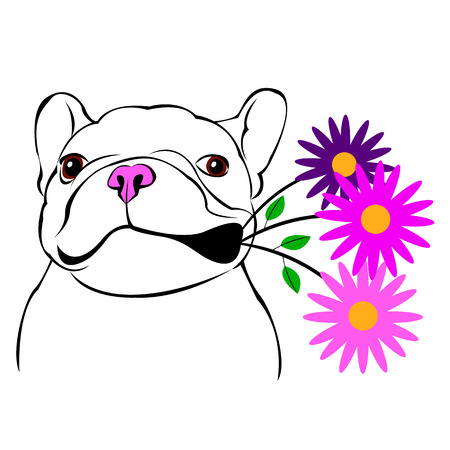 short haired: dog, vector, breed, cute, pet, animal, bulldog, french