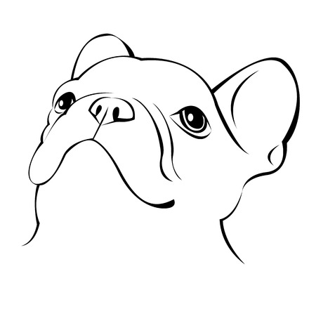 dog, vector, breed, cute, pet, animal, bulldog, illustration Çizim