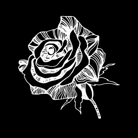linearity: Vector multicolor rose flowers. Vector stylized roses.