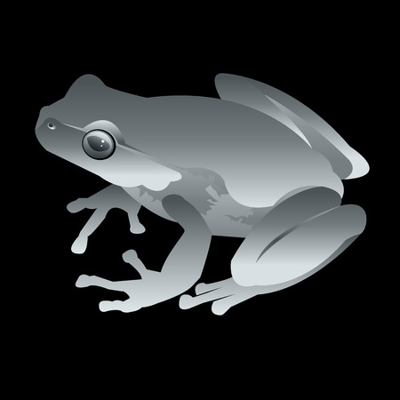 swamp toad. gray frog. vector green small illustration Illustration