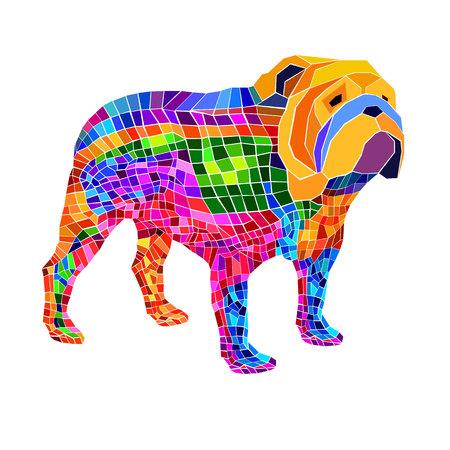 bulldog english dog breed portrait illustration face