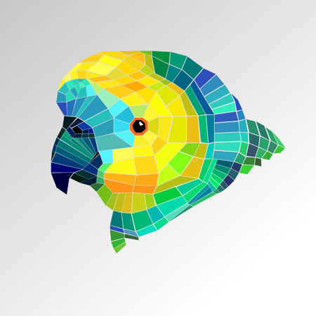 parrot bird vector tropical colorful portrait beak