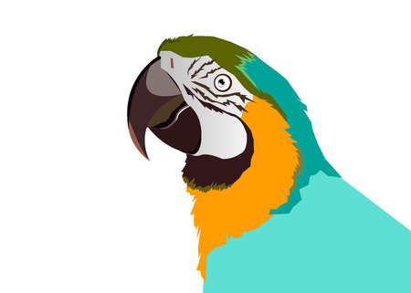 parrot bird vector tropical macaw red colorful 向量圖像