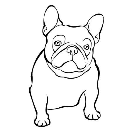 Sfondo bulldog francese. Illustrazione vettoriale. Cane, illustrazione, francese Archivio Fotografico - 78612754