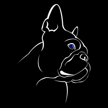 French bulldog background. Vector illustration. Dog, illustration, french