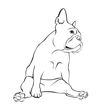 Sfondo bulldog francese. Illustrazione vettoriale. Cane, illustrazione, francese Archivio Fotografico - 79718815