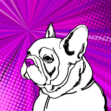 Bulldog vector illustration.