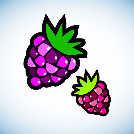 berry, raspberry, vector, fruit, food, sweet, illustration, natural, summer Imagens - 110312575
