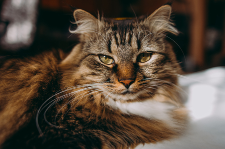 grey cat: Grey cat lying on bed Stock Photo