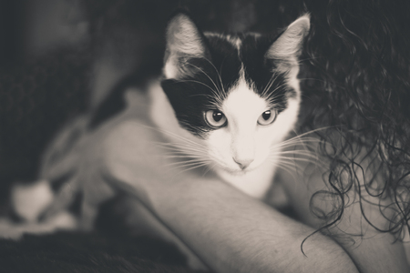 heartwarming: Black and white kitten with green eyes, warm toned picture Stock Photo