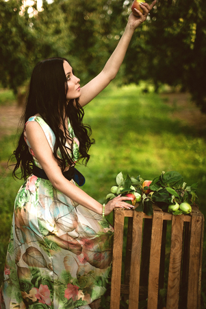 Woman in colorful maxi dress with box with apples in a sunny garden. Young smiling attractive woman is standing with full basket of organic apples in a sunlit orchard. Country happy lifestyle concept. Stock Photo