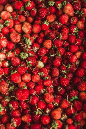 harvested: background from freshly harvested strawberries, directly above.