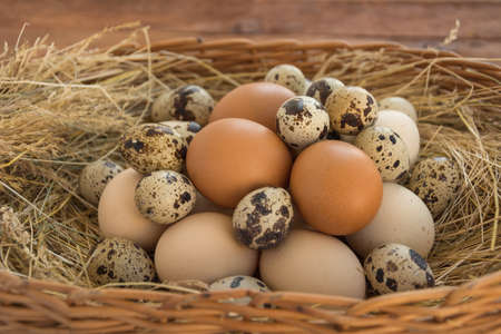 Quail and chicken eggs Stock Photo