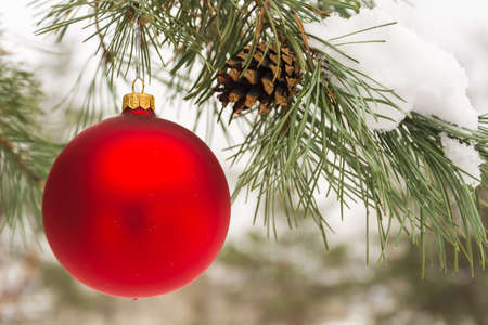 Red Christmas tree ball on a snow-covered tree branch winter holidays and decoration concept 版權商用圖片