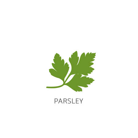Parsley. Green healthy parsley isolated over white background Vector illustration