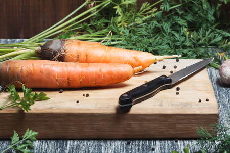 unwashed: Carrots unwashed on a chopping board with knife. fresh carrots bunch on rustic wooden background
