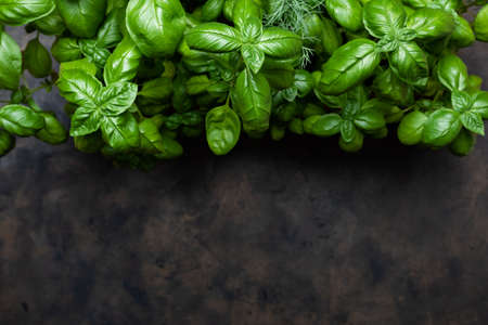 Fresh green basil on a dark background. Old metal tray. Flat lay, copy space for text