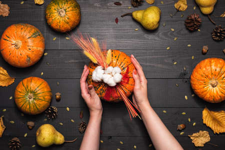 Female hands holding festive fall decor from pumpkins, leaves, and wheat on a dark wooden background. Thanksgiving Day or Halloween composition, flat lay