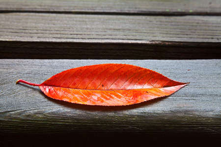 Red and orange oblong fall leaf resting on wet wooden park bench