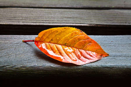 Yellow and orange oblong fall leaf resting on wet wooden park bench