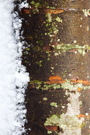 Wet tree trunk with melting snow on the side with a lot of texture6 Stock Photo