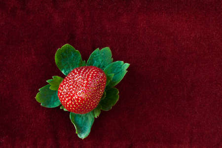 Red strawberry surrounded by green leaves isolated on red velvet cloth background.