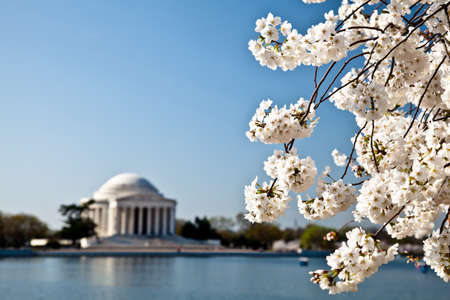 Cherry blossoms around the Tidal Basin in Washington DC with Jefferson Memorial Stock Photo - 12959540