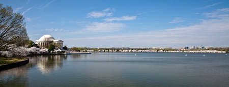 Panoramic veiw of cherry blossoms around the Tidal Basin in Washington DC with Jefferson Memorial