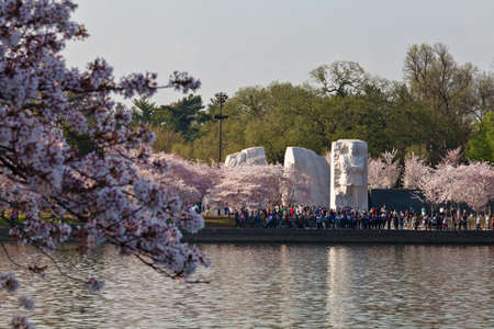 Cherry blossoms around the Tidal Basin in Washington DC with Martin Luther King Memorial